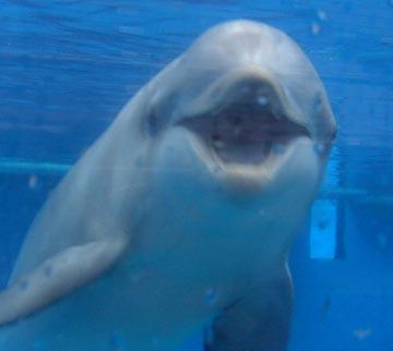 smilingdolphin.jpg