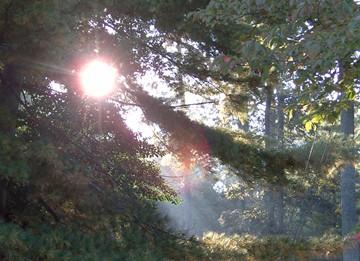 morningsunlight.JPG